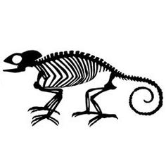 Unmounted Rubber Stamp   Skeletal Chameleon by CarolynsStampStore
