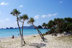 Ama Beach on Zamami Island (Okinawa) is where you can see sea turtles easily. #Japan