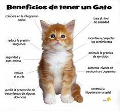 Beneficios de tener un gato!