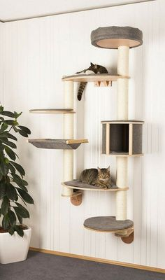 Find varied and practical ideas for the cat climbing wall! Katze Find varied and practical ideas for the cat climbing wall! Katze The post Find varied and practical ideas for the cat climbing wall! Katze appeared first on Katzen. Animal Room, Animal Decor, Cat Climbing Wall, Cat Climbing Shelves, Diy Cat Tower, Cat Towers, Cat Playground, Playground Design, Cat Condo