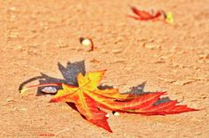 The Fall's Parade. Fall, Animals, Autumn, Animales, Fall Season, Animaux, Animal, Animais