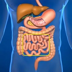 Tuit Nutrition: Digestion for (not-so) Dummies: Small Intestine Pt...