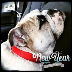 Photo taken by @mud_the_bulldog on Instagram, pinned via the InstaPin iOS App! (12/31/2015)