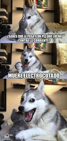 Perro humor