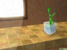 Imagem intitulada Grow Lucky Bamboo Step 5