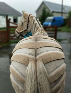 Horse and Man - Exploring the bond between equines and their people. Horse Mane Braids, Horse Braiding, Pretty Horses, Beautiful Horses, Horse Clip Art, Horse Clipping, Rare Horses, Horse Videos, Horse Grooming