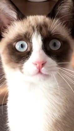 Cute Kitten Gif, Cute Cats And Kittens, Cat Gif, Kittens Cutest, Funny Cats, Funny Animals, Cute Animals, Crazy Cat Lady, Crazy Cats