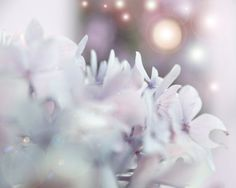 Dreamy Photograph Pink Mauve Purple Pastle Home Decor by DovieMoon, $20.00