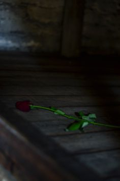 The only thing left living - taken at Auschwitz