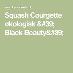 Squash Courgette økologisk ' Black Beauty'