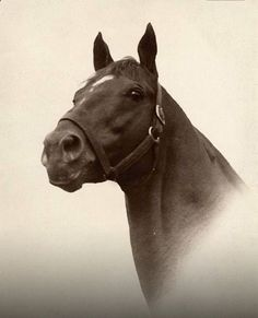 Man O War no photo captures better the look that champions have than this..