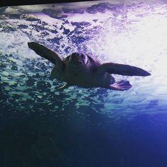 Tartaruga all'acquario di Cala Gonone Sardegna