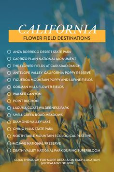 It's a great season for the Super Bloom! Here are 11 California Flower Fields You Must See This Spring // Local Adventurer #superbloom #california #flowerfields #spring