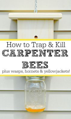 How To Trap and Kill Carpenter Bees and Wasps Too How to trap and kill carpenter bees, wood bees, wasps, hornets and yellow jackets naturally. Kill Carpenter Bees, Carpenter Bee Trap, Wasp Traps, Bee Traps, Wasp Trap Diy, Wood Bee Trap, Boring Bees, Bee Catcher, Wasp Catcher