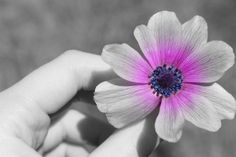 black and white photography with color - Google Search