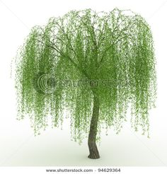 Tree-the development of our LOGO