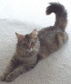 Millie is a silky soft cat who has a sweet disposition. She would love to meet you! For more information on Millie, please call Beverly at 256-617-2322.