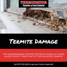 Did you know? The subterranean termite destroys homes at a rate almost eighty times that of the drywood termite. If you think you may have termites, be sure to get an inspection ASAP to prevent further damage! Call Terminator at 479-783-6200! More information: www.goterminator.com/services #TerminatorTPC #TermiteDamage #TermiteControl Termite Pest Control, Termite Damage, Drywood Termites, The Crawl, Ants, How To Dry Basil, Homes, Houses, Ant