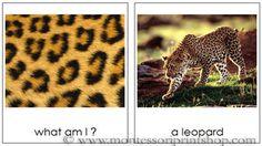 Animal Skins Matching Cards