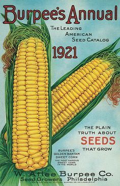 The leading American seed catalog. The plain truth about seeds that grow. Burpee's Golden Bantam Sweet Corn, the most famous sweet corn in the world. Vintage Labels, Vintage Ephemera, Vintage Cards, Vintage Signs, Vintage Postcards, Vintage Poster, Vintage Prints, Vintage Patterns, Vintage Gardening