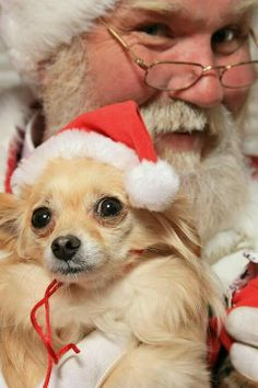 Santa paws!  Puppy has the same look as a lot of tiny kids their first visit.  lol