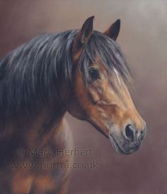 Animal Portraits by Mary Herbert Click the photo to place a free equestrian ad...