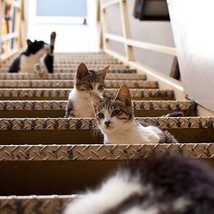 #cat ぬこ x4