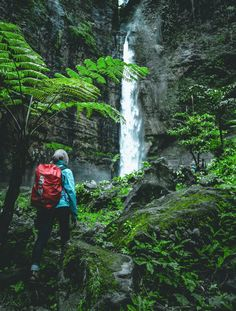 person walking towards waterfall at daytime photo – Free Person Image on Unsplash Daniel Boone National Forest, Land Between The Lakes, Cumberland Falls, Red River Gorge, Forest Pictures, Travel Aesthetic, Travel Goals, Trekking, State Parks