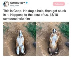 Funny Dogs Pictures From Twitter #funnydogs