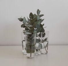 eucalyptus branches - Alvar Aalto vase , photo by Alessandra Morandini