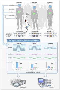 Tying Variation to Gene Expression