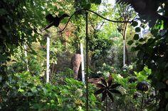 Ferronerie, masques de cocotier du Timor et soleil de septembre. Taffin à Montmorency