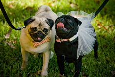 pugs in a wedding  Pug ♥ |Sharethewedding.com