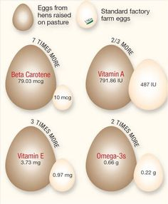 Backyard Chickens lay healthier eggs