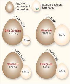 Backyard Chickens lay healthier eggs