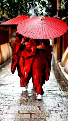 Traditional Kimono dress women in Japan / Geisha apprentices, Kyoto People *** By momoyama Japan Kultur, Samurai, Japan Woman, Women In Japan, Japan Girl, Traditional Kimono, Traditional Japanese, Traditional Clothes, Red Umbrella