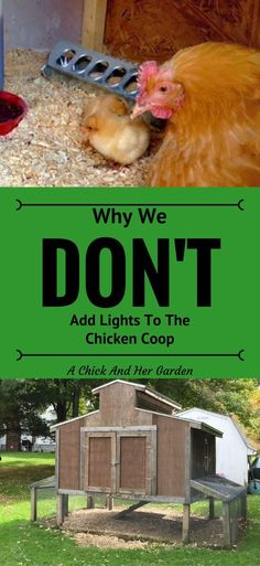 Why We Don't Add Lights To The Chicken Coop - A Chick And Her Garden