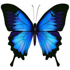 75 Mejores Imágenes De Mariposas Blue Butterfly Blue Nails Y
