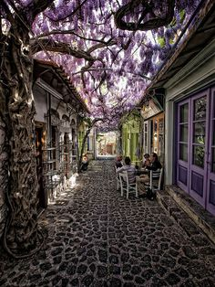 Molyvos Village In Lesvos, Greece by Costas Stamatellis Mithymna is a former municipality on the island of Lesbos, North Aegean, Greece. Since the 2011 local government reform it is part of the municipality Lesbos, of which it is a municipal unit. Beautiful Streets, Beautiful Places, Beautiful Flowers, Stunningly Beautiful, Amazing Places, Flowers Nature, Amazing Photos, Beautiful Pictures, Beautiful Dream