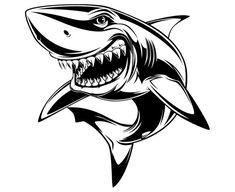 Illustration of Vector illustration: toothy white shark vector art, clipart and stock vectors. Drawing Cartoon Characters, Character Drawing, Cartoon Drawings, Fish Drawings, Animal Drawings, Art Drawings, Hai Tattoos, Shark Drawing, Skull Art