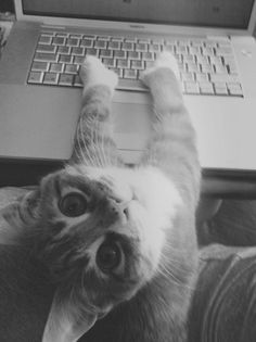 Another writing kitty...