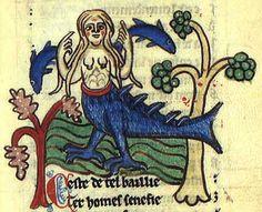 Siren; is a deadly creature, half human, half bird or fish.