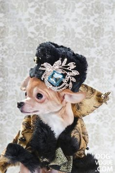 High Fashion Portraits of Chihuahuas | Pleated-Jeans.com