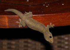 Larry the Lizard