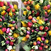 Flower markets are just another kind of garden. Bloemenmarkt, Amsterdam, The Netherlands