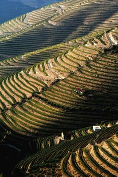 Alto Douro region, north Portugal ~ Wine has been produced by traditional landholders here for some 2,000 years.
