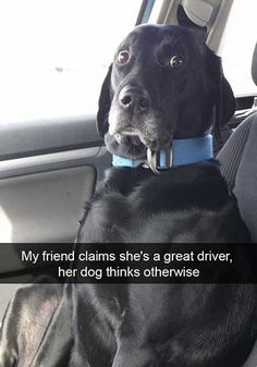 Funny Dog Snapchats That Will Have You Howling With Laughter