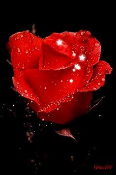 Decent Image Scraps: Animated Roses 3
