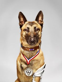Getting a close-up of Layka the military dog was harder than photographer Martin Schoeller thought it would be. 