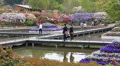 : Ashikaga Flower Park in Ashikaga City, Tochigi Prefecture.